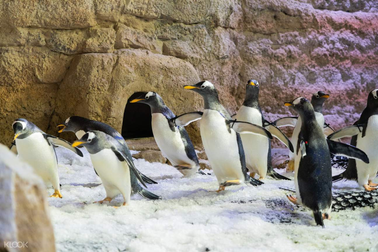 A set of 8 males & 8 females penguin